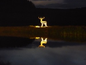 Floodlitdeer2